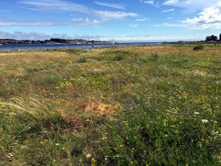 Fyn, where a flower meadow meets the sea